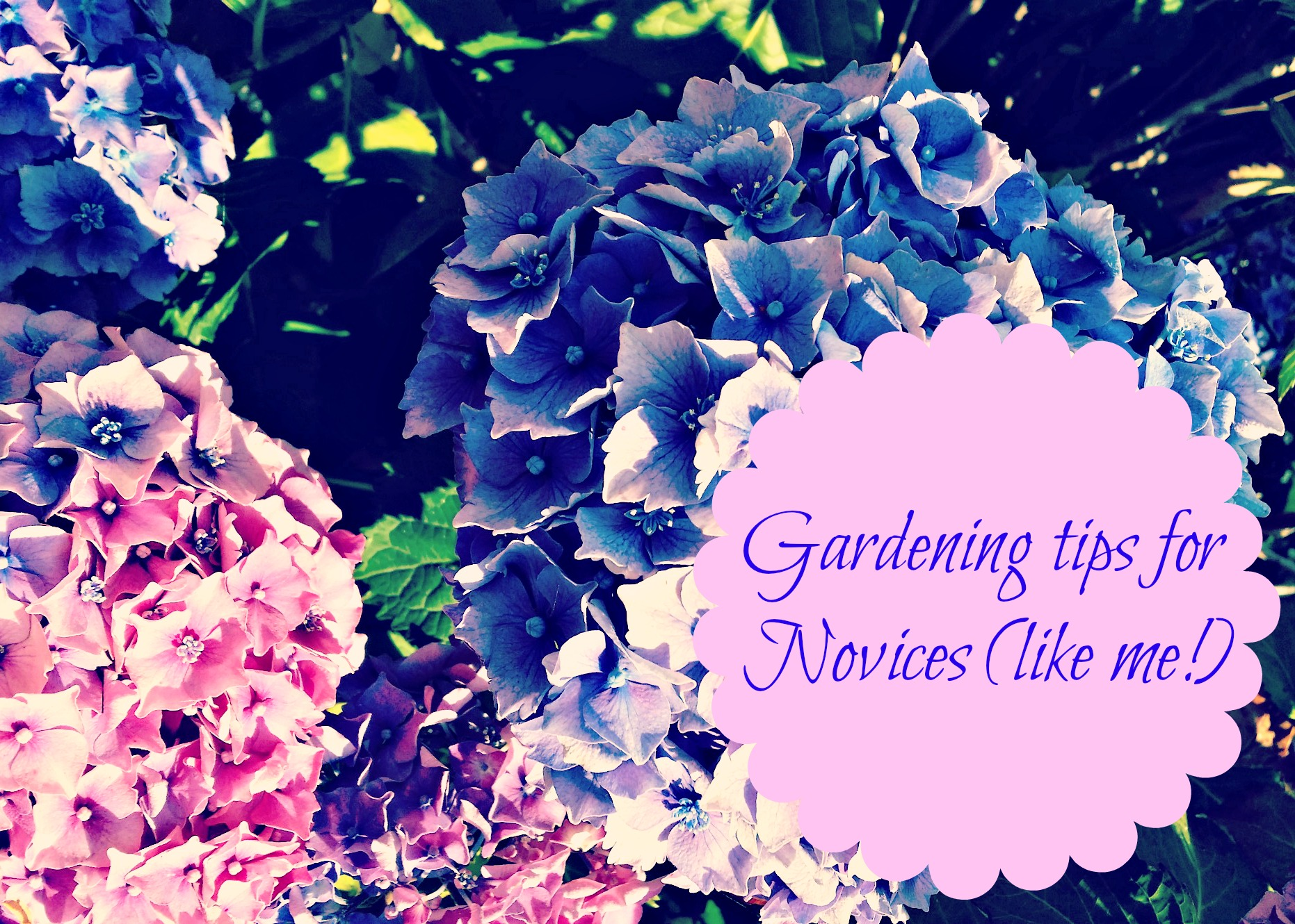 Gardening tips for novices